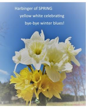 Daffodils 3.24.19