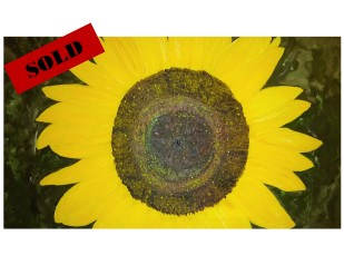 Sunflower 1 Sold